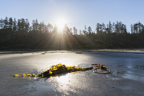Canada, British Columbia, Vancouver Island, Pacific Rim National Park Reserve of Canada, Long Beach at sunrise - FO005303