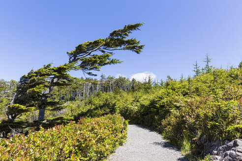 Canada, British Columbia, Vancouver Island, Pacific Rim National Park Reserve of Canada, path at Wild Pacific Trail - FOF005294