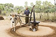 Myanmar, ox running an oil mill - DR000169