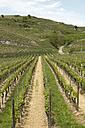 Germany, Baden-Wuerttemberg, vineyards near by Bischoffingen - DR000166