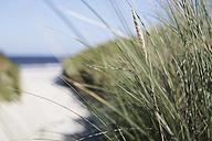 Germany, Lower Saxony, East Frisia, Langeoog, dune at the beach - JATF000278