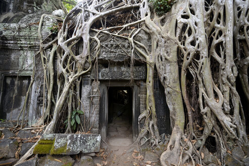 Cambodia, Siem Reap, Ta Prohm, Strangler fig growing over temple ruins - FLK000074