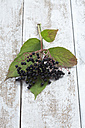Elderberries (Sambucus) with leaves on white wooden table, studio shot - CSF020255
