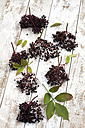 Elderberries (Sambucus) with leaves on white wooden table, studio shot - CSF020258
