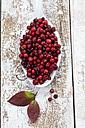 Cranberries (Vaccinium vitis-idaea) on a spoon, studio shot - CSF020277