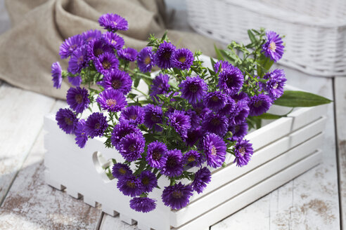 Purple asters in wooden box - CSF020305