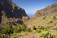Tenerife, Teno Mountains, Masca - WGF000078