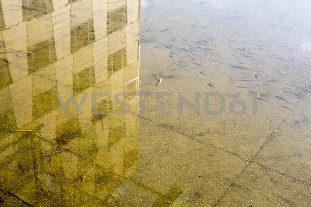 Germany, Berlin, Potsdamer Platz, fish in fountain - NGF000044 - Nadine Ginzel/Westend61