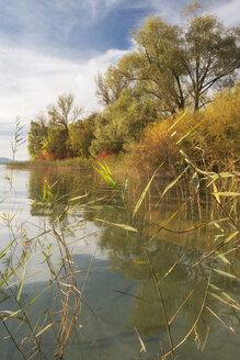 Germany, Baden-Wurttenberg, Lake Constance, Sipplingen, Lakeshore in autumn - SH000876