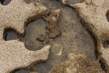 Ireland, Cavernous rock at coast - SRF000337