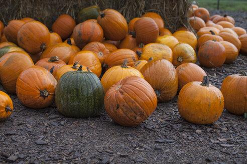 Germany, Baden-Wuerttemberg, Vaihingen, pumpkins for sale - SBDF000301