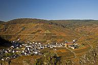 Germany, Rhineland-Palatinate, Mayschoss, Vineyard in autumn - WGF000090