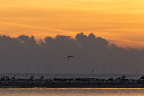 Germany, East sea, sunrise - SR000378