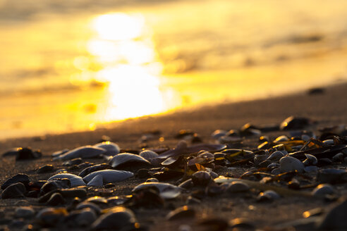 Germany, Baltic Sea, Bay of Luebeck, beach with shells during sunset - SR000381