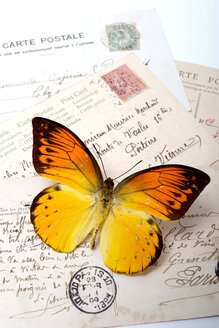 Orange butterfly on postcards - AWDF000712