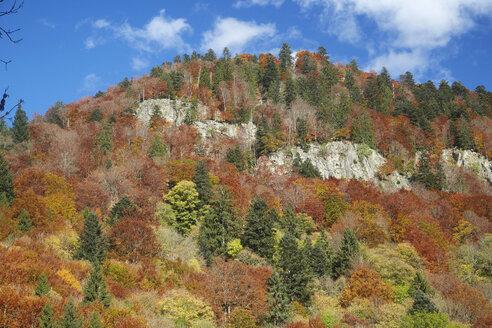 Germany, Baden-Wuerttemberg, St Wilhelmer Valley near Freiburg - DHL000165