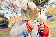 Germany, Bonn, Baby boy covering face with  autumnal leaf i - MFF000622