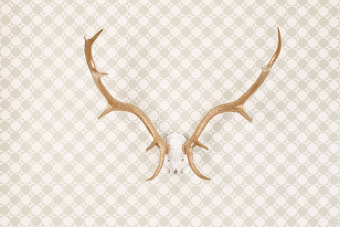 Golden varnished antler on wallpaper, studio shot - DRF000271