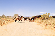 USA, Utah, Escalante, Cowboy herds cattles - MBE000833