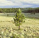 USA, Colorado, Nature and landscape near Salida - MBEF000846