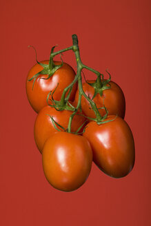 Bunch of vine tomatoes, studio shot - WSF000003