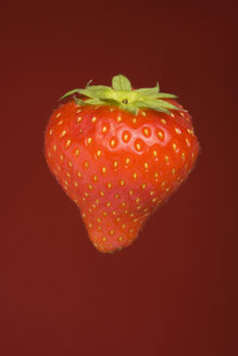 Single strawberry (Fragaria), studio shot - WSF000025
