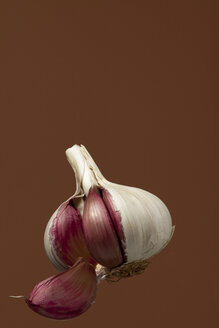 Garlic bulb, studio shot - WSF000031