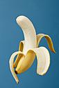 Half peeled banana (Musa) - WSF000044