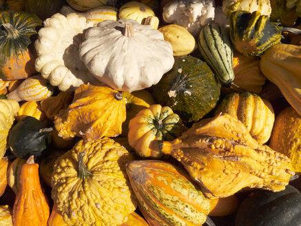 Germany, Variety of pumpkins - STKF000646