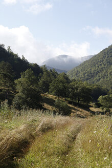 Spain, Catalonia, Meadow in the Pyrenees - JMF000250