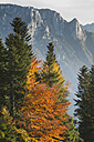 Austria, Tyrol, Inn valley, Sunset, autumn trees - FFF001380