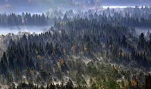 Germany, Bavaria, Upper Bavaria, Icking, Pupplinger Au, forest - LHF000301