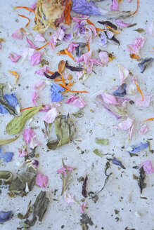 Colorful dried out petals - AX000513