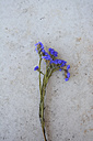 Blue Sea Lavender - AXF000540