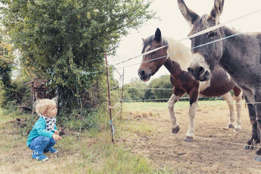 Little boy watching a horse and a donkey - MFF000674
