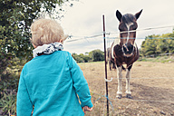 Little boy watching a horse - MFF000675