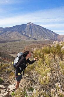 Spain, Canary Islands, Tenerife, Los Roques de Garcia, Mount Teide, Teide National Park, Female hiker smelling Retama del Teide, Cytisus supranubius - UMF000678