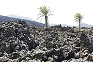 Spain, Lanzarote, Timanfaya National Park, - JAT000453