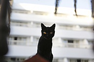 Spain, Lanzarote, Puerto del Carmen, Black cat infront of hotel - JAT000475