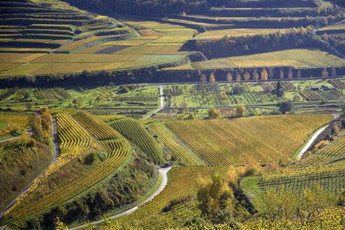 Germany, Baden-Wuerttemberg, vinyard terraces near Oberbergen - DHL000189