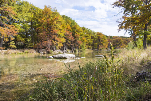 USA, Texas, Concan, Texas Hill Country landscape at autumn, Cypress trees at the Frio River at Garner State Park - ABAF001080