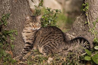 Croatia, Vrsar, Cat leaning against tree - KJ000258