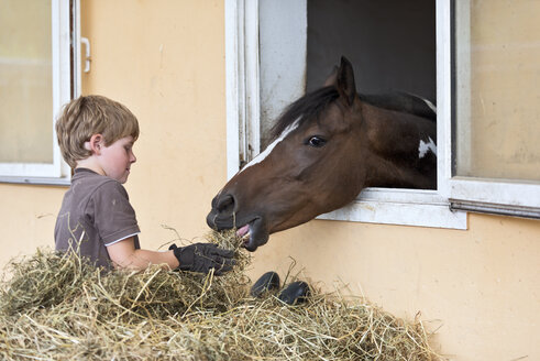 Germany, NRW, Korchenbroich, Boy feeding horse in stable - CLPF000003