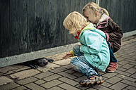 Two children looking at snout of watchdog - MJ000413