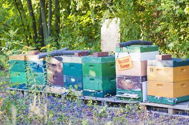 Germany, Saxony, beehives at botanical garden - MJF000410