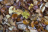 Germany, Baden Wuerttemberg, Zollernalbkreis, autum leaves - ELF000664