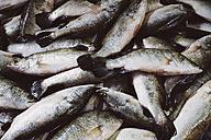 Thailand, Ratchaburi, Damnoen Saduak Floating Market, fresh fish - MBEF000910