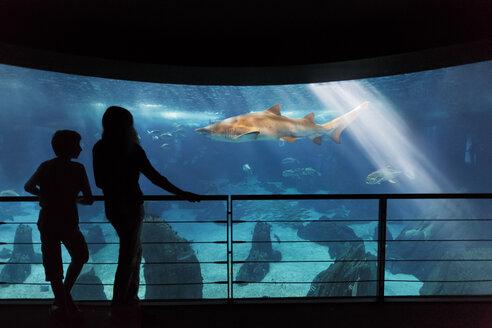 Portugal, Lisbon, Oceanario de Lisboa, two visitors in front of aquarium - BI000144