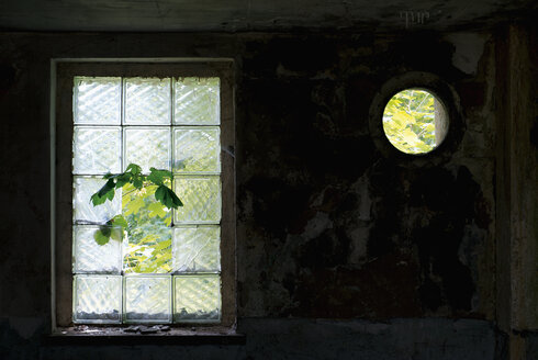 Germany, Brandenburg, Wustermark, Olympic village 1936, branch growing through broken glass panel of decaying military building - VI000074