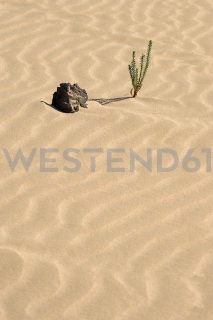 Spain, Fuerteventura, Parque Natural de Corralejo, plant and lava rock at sand dune - VI000094 - visual2020vision/Westend61